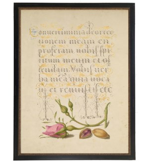 Vintage bookplate from the 1500s with calligraphy with pink rosebud