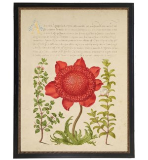 Vintage bookplate from the 1500s with calligraphy with red flower