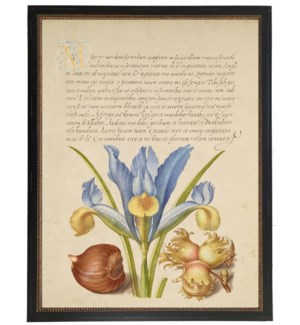 Vintage bookplate from the 1500s with calligraphy with blue Iris