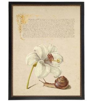 Vintage bookplate from the 1500s with calligraphy with white Lily