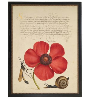 Vintage bookplate from the 1500s with calligraphy with Poppy