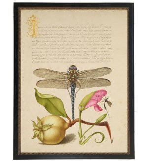 Vintage bookplate from the 1500s with calligraphy with Dragonfly