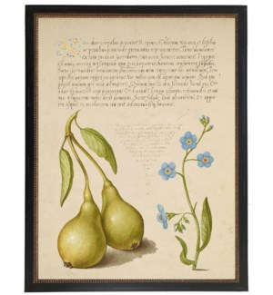 Vintage bookplate from the 1500s with calligraphy with set of pears
