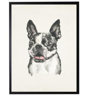 Watercolor Boston Terrier