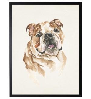 Watercolor Bulldog