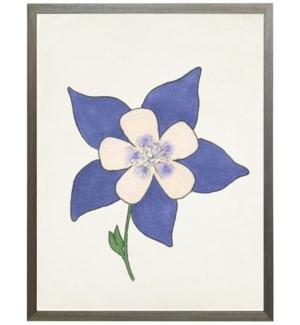 Watercolor Rocky Mountain Columbine flower