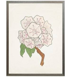 Watercolor Mountain Laurel flower