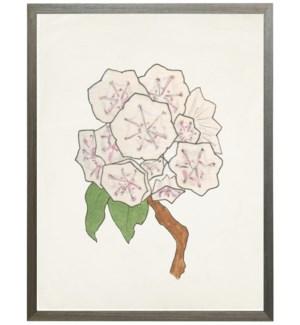 Watercolor Mountain Laurel flower