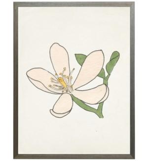 Watercolor Orange Blossom Flower