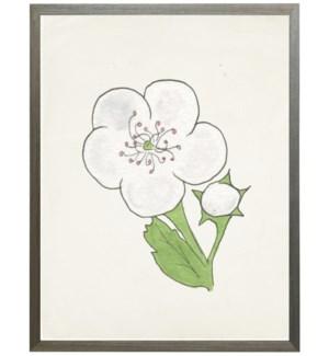 Watercolor Hawthorn flower