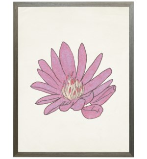 Watercolor Bitterroot flower