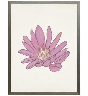 Watercolor Bitterroot flower