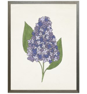 Watercolor Lilac flower