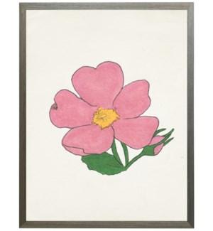 Watercolor Wild Prarie Rose flower