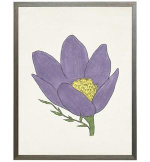 Watercolor Pasque flower