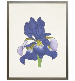 Watercolor Iris flower