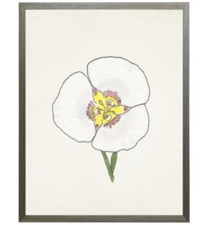 Watercolor Sego Lili flower