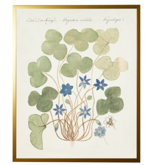 Vintage bookplate with blue anemone
