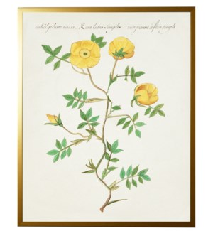 Vintage bookplate with yellow flowers
