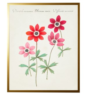 Vintage bookplate with pink anemones