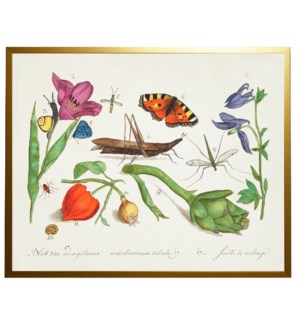 A Bugs and flowers vintage book plate