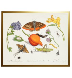 C Bugs and flowers vintage book plate