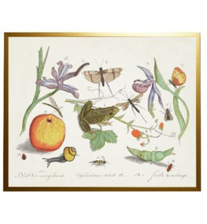 D Bugs and flowers vintage book plate