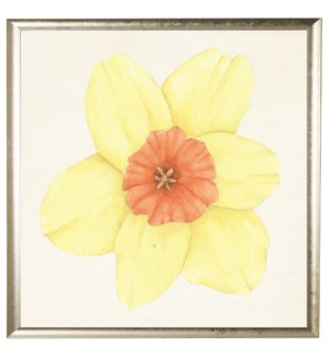 Watercolor daffodil yellow with orange center