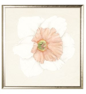 Watercolor daffodil white with light pink center