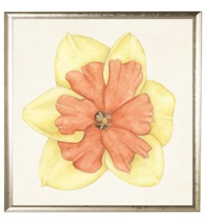 Watercolor daffodil yellow with coral center