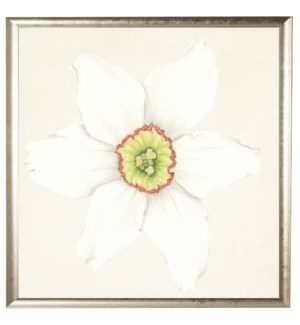 Watercolor daffodil white with green center