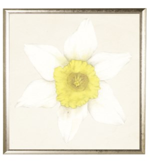 Watercolor daffodil white with yellow center