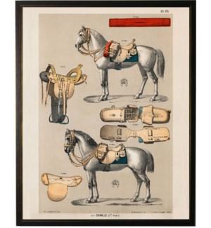 Horse bookplate C