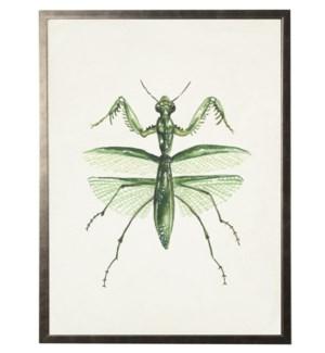 Watercolor Praying Mantis top view