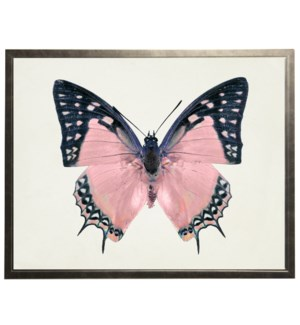 Pink with black tips butterfly