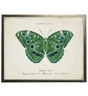 Blue and green butterfly on title page