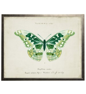 Green butterfly on title page