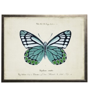 Solid blue and green butterfly on title page