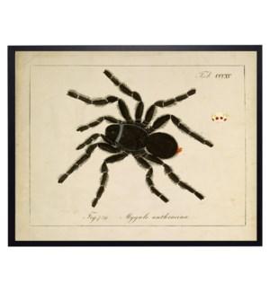 Vintage spider bookplate
