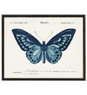 Blue Butterfly B