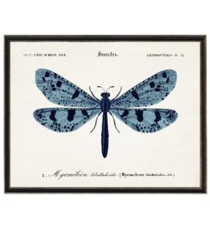 Blue Dragonfly C