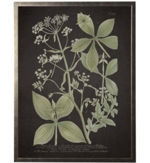 Green multi leaves on black bkgd