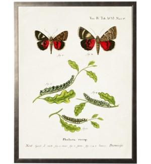 Butterflies w/ caterpillars