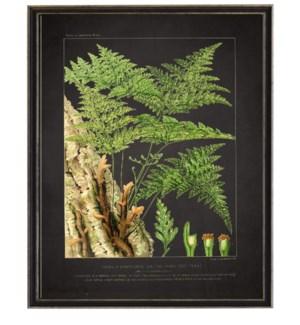 Vintage fern print with border