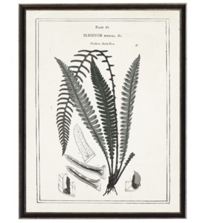 Black and white fern with border