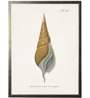 Plate 16 Seashell on natural background