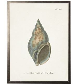 Plate 28 Seashell on natural background