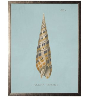 Plate 1 Seashell on spa background
