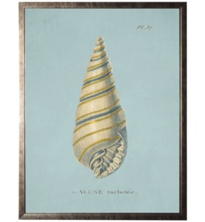 Plate 37 Seashell on spa background
