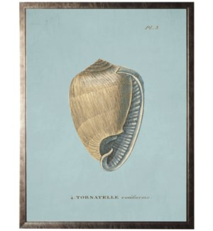 Plate 3 Seashell on spa background